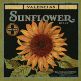 california-sunflower